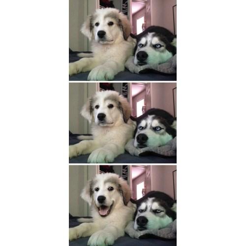Medium Crop Of Dog Joke Meme