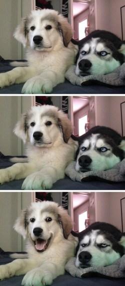 Small Of Dog Joke Meme