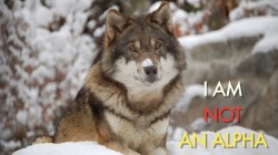 Small Of Male Wolf Names