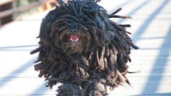 Glomorous Zuck Is Having A But What About That Dog That Looks Like A Mop Commercial Little Dog That Looks Like A Mop