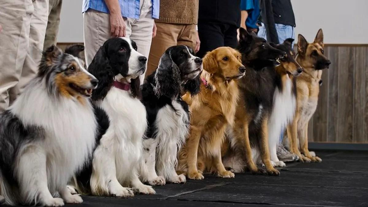 Serene How Many Se Dog Breeds Do You Dog Breed Identification Quiz Sporcle Dog Breed Identification Quiz Buzzfeed bark post Dog Breed Identification Quiz