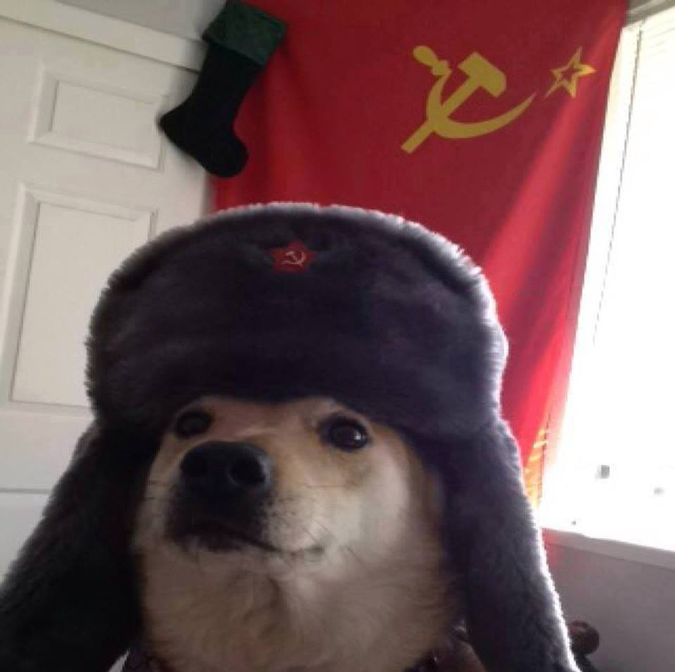 Gallant Russian Dog Russian Language Dog Friend Dog Dog Like Mammal Dog Breed Dog Breed Group Snout Comrade Dogs Know Your Meme Dog Bark bark post Dog In Russian