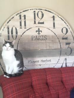 Prissy Found A Huge Wall Clock Just Missing Not Sure Wher To Fix It Tosell Or Eir Cat Approves Found A Huge Wall Clock Just Missing Not Sure Wher To Fix