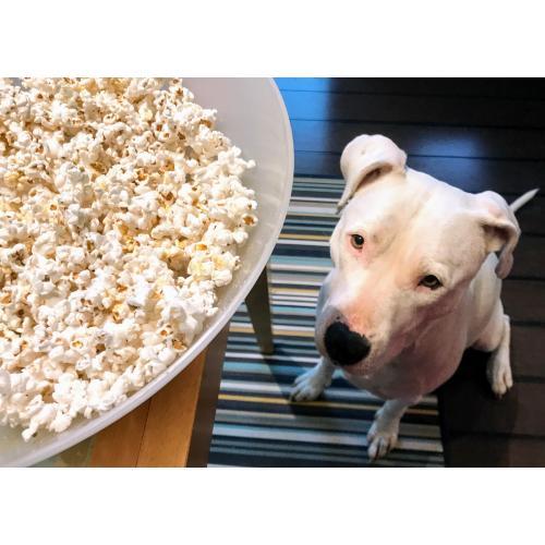 Medium Crop Of Can Dogs Have Popcorn