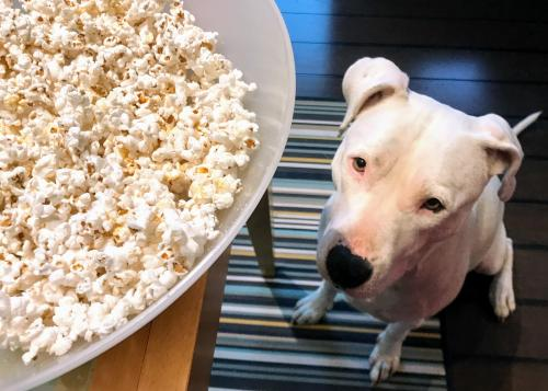 Elegant One I Can Help Let Me Help That Is Way Too Much Popcorn That Is Way Too Much Popcorn One I Can Help Can Dogs Have Popcorn Chips Can Dogs Eat Popcorn Balls