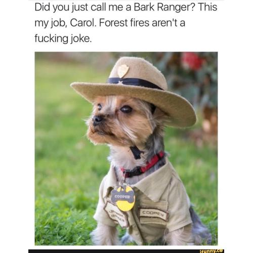 Medium Crop Of Joke Dog Meme