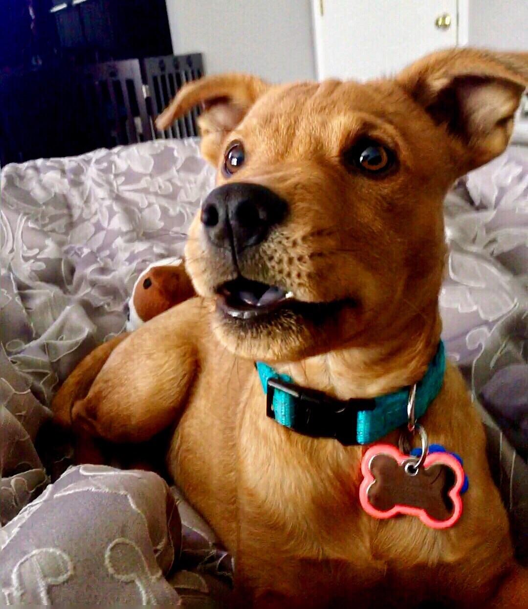 Fullsize Of What Kind Of Dog Is Scooby Doo