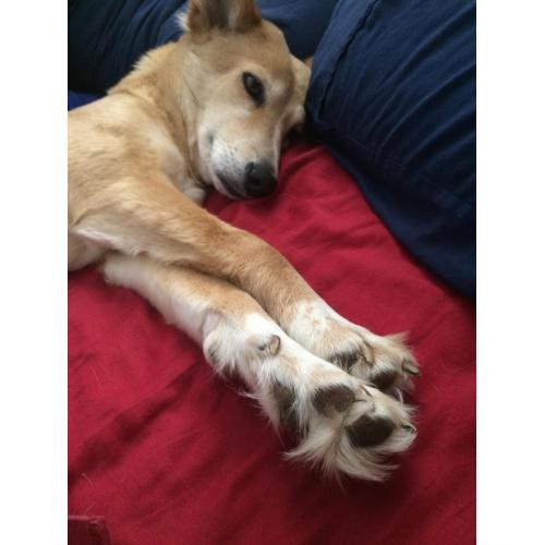 Medium Crop Of How Many Toes Does A Dog Have
