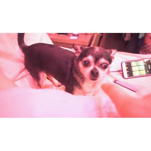 Medium Crop Of Jenna Marbles Dogs