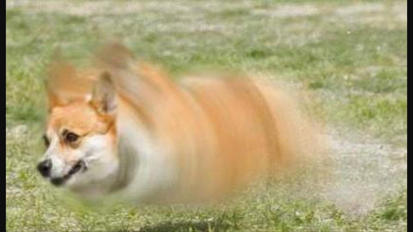 Fullsize Of Fastest Dog In The World