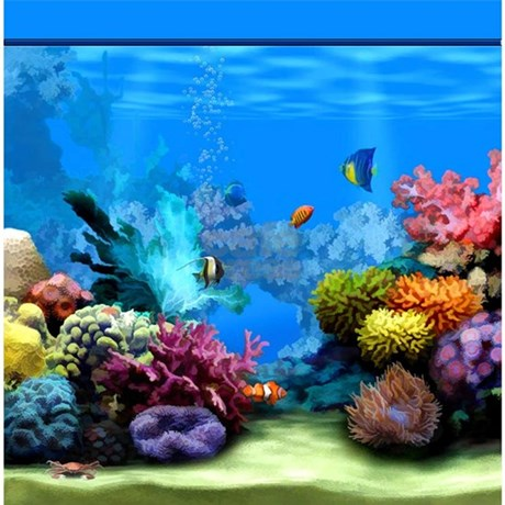 Tropical Fish Aquarium with Bright Colored Coral S by