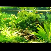 fish aquarium video youtube - Discus Fish Tank   YouTube