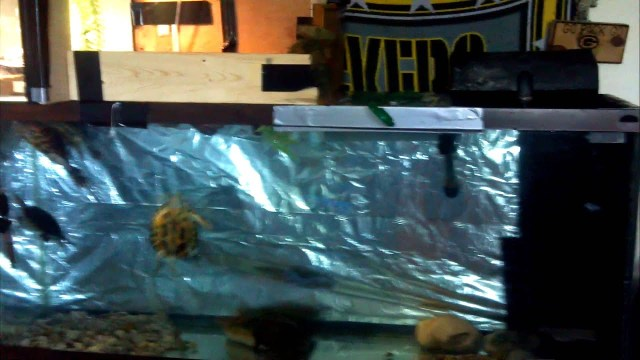 55 gallon turtles tanks idea