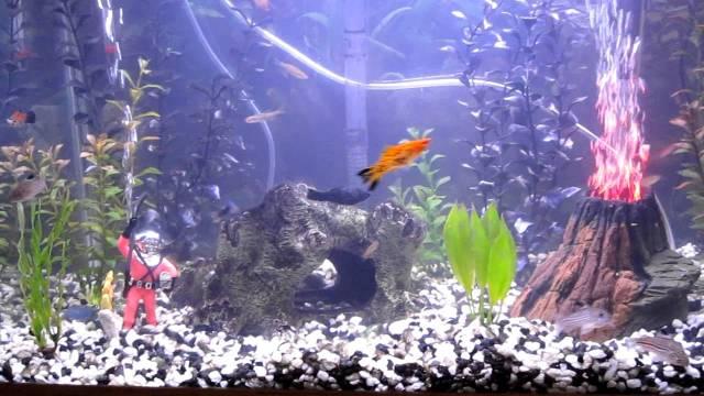 New Volcano in fish tank 20 gallon   YouTube