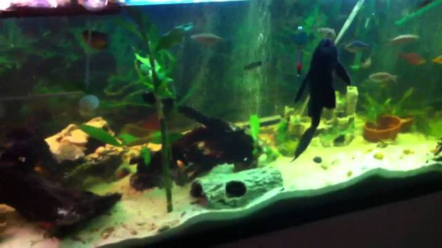 135 gallon turtle and fish tank   YouTube
