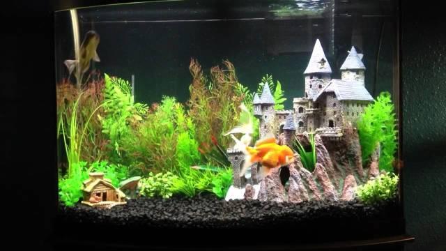 Harry Potter inspired Goldfish aquarium   YouTube