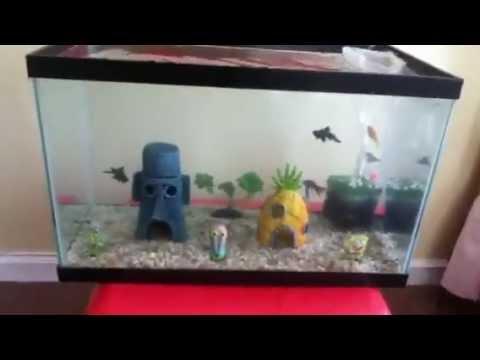 10 gallon goldfish spongebob aquarium update 2   YouTube