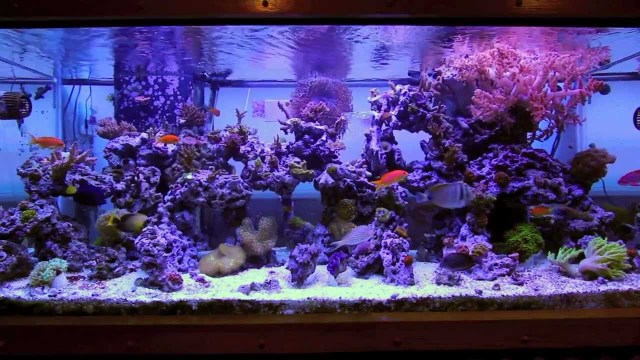 Marshall's 220 gallon mixed sps lps reef tank   YouTube