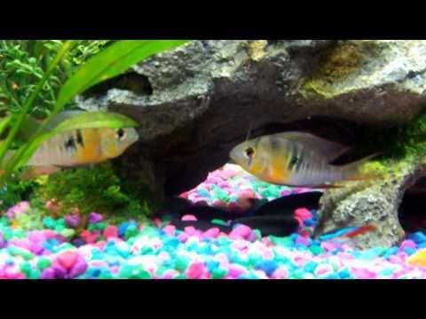 Freshwater Aquarium Fish and Plants   YouTube