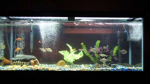 75 gallon fish tank   YouTube