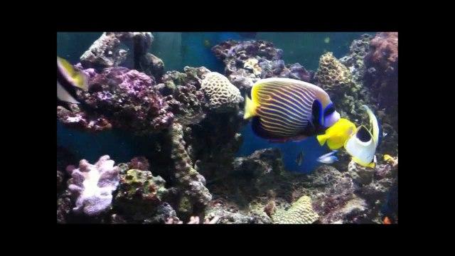 Dave's Marine Fish Tank   YouTube