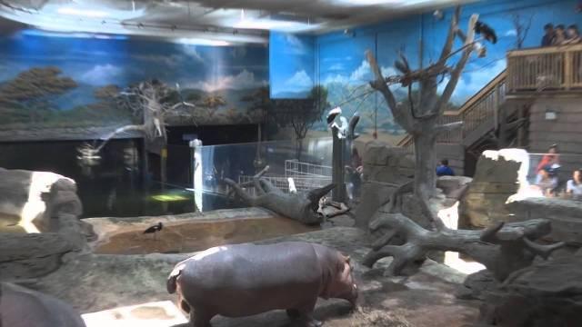 Adventure Aquarium   Camden, NJ   YouTube