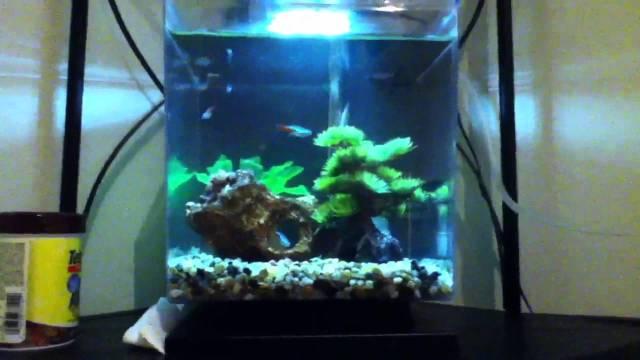 Neon Tetra tank 1.5 gallon cube LED Aquarium Kit   YouTube