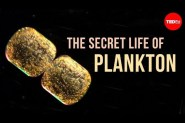 Sharing the story of Plankton Chronicles Project: Q&amp;A with Tierney&nbsp;Thys