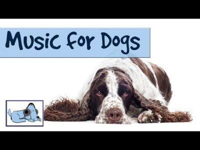 Relaxing Music For Dogs 1 Hour - OVER 1 HOUR OF RELAXING DOG MUSIC! Mu