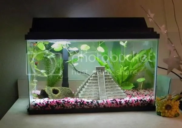 The 15 dollar aquarium stand   Thagirion Realm