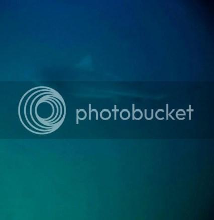 bull-sharks