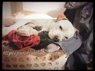 Meet Skittles The Pit Bull Funny Dog- He's a Rockstar Sleeper!