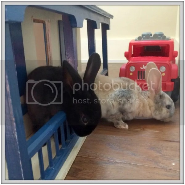 What started out as a couple of curious foster bunnies exploring our playroom, turned into a summer adventure of farm experiences!