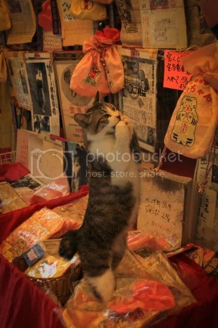 photo Houtou-Shrine-Saga-16.jpg