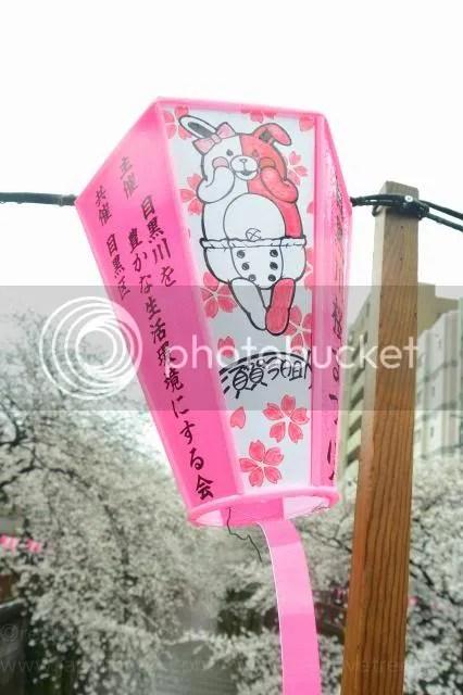 photo Sakura-meguro-11.jpg