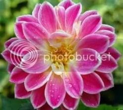 Flower Shop Online