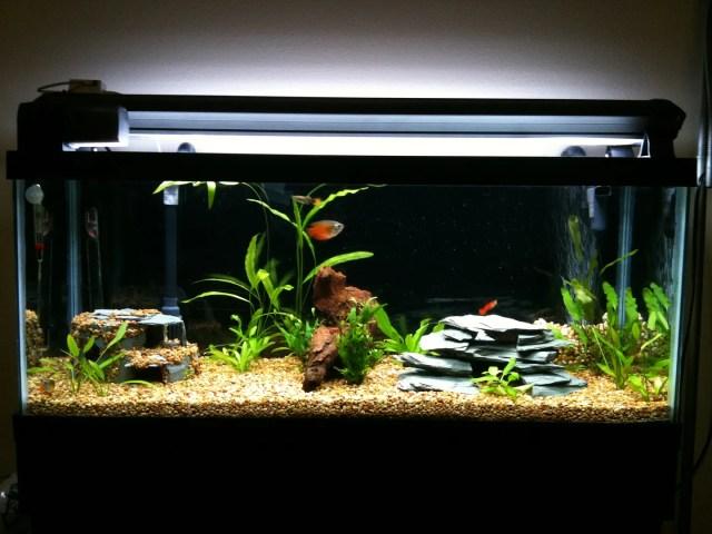 New (to me) 30 gallon long!   Page 3   Aquarium Forum