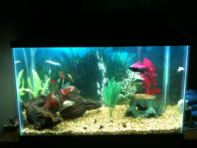 10 gallon fish tank live plants live plants in aquariums for Fish for a 10 gallon tank