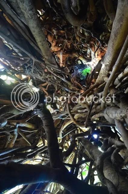 Baler Tour Balete Tree