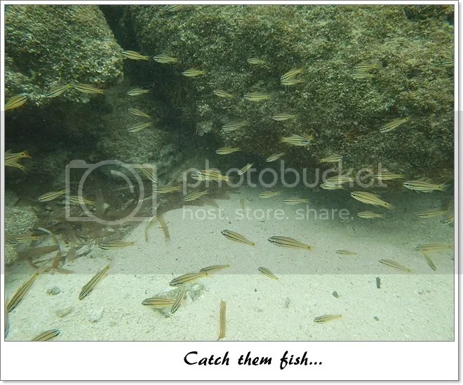 Fish feeding Bantayan Virgin Island