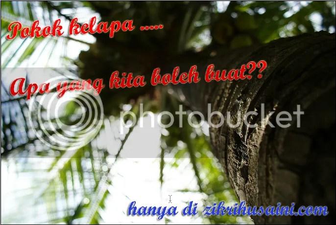 pokok kepala, gamabr pokok kelapa, kegunaan asas pokok kelapa, daun kelapa, sabut kelapa, kegunaan asas pokok kelapa