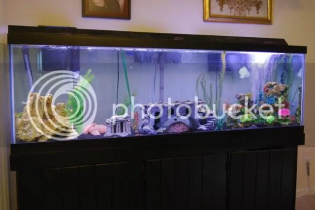 60 Gallon Reptile Tank | Reptile Tanks For Sale