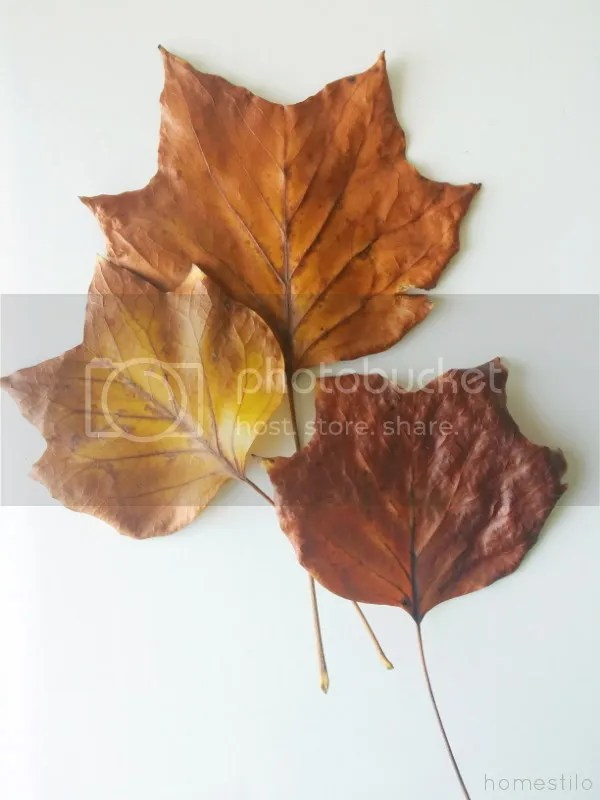 photo diy_place_setting_leaves.jpg