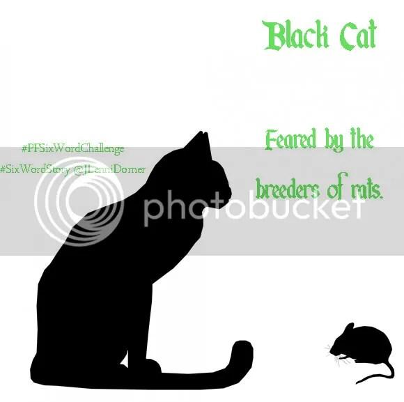 Black Cat #PFSixWordChallenge #SixWordStory @JLenniDorner