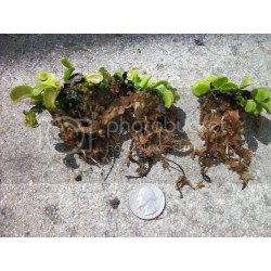 Small Crop Of Home Depot Peat Moss