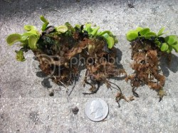 Small Of Home Depot Peat Moss