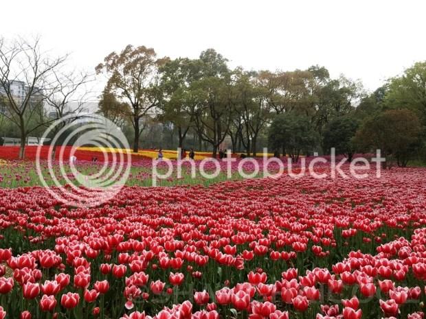 photo daning-shanghai7_zpsqkds8lj9.jpg