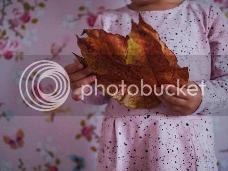 photo P1014510_zpsz5cdesxu.jpg