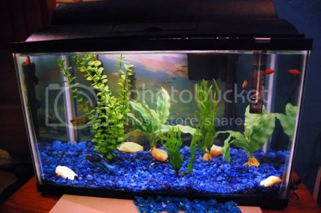 10 gallon fish tank maintenance betta 2017 fish tank for Fish tank care