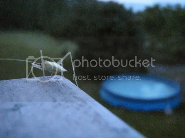 cricket and wading pool
